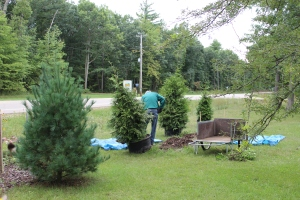 Evergreens Genes back USE