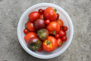 Tomatoes in bowl USE