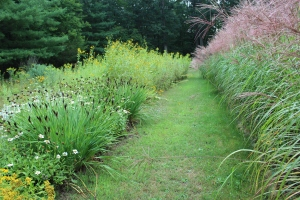 Walkway lined w grasses