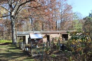 HORZ coop under tree barn in background