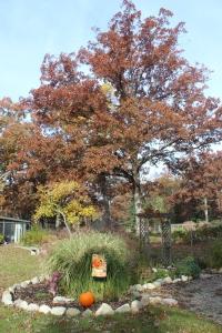Turn around big oak USE