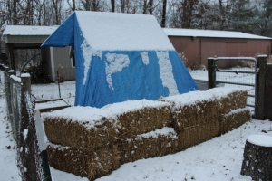 Coop tarp and straw USE