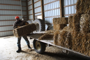 gene unloading in the barn