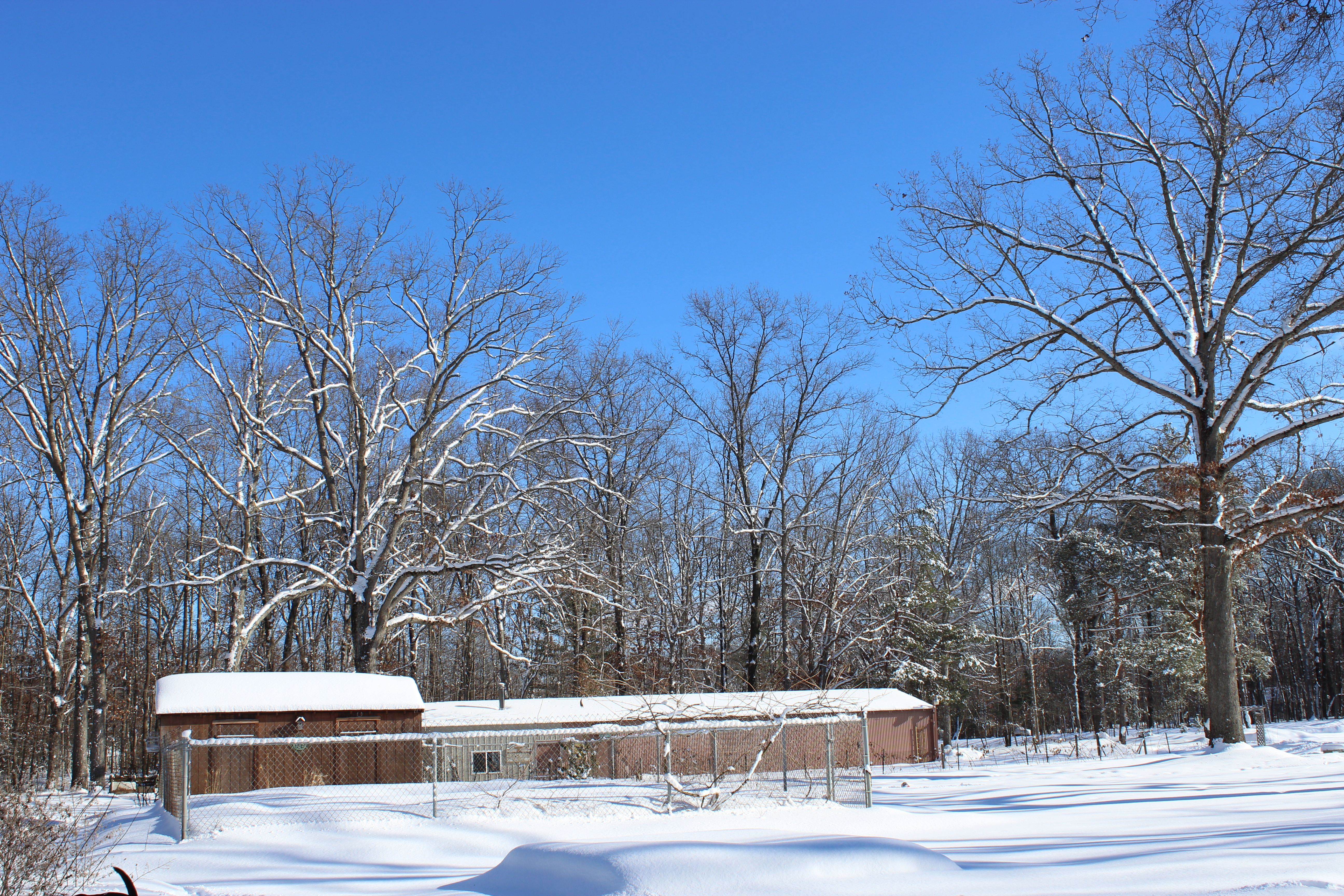 Inspired by our homesteads majestic white oak trees for Does homesteading still exist