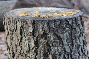 Stump with mealworms USE