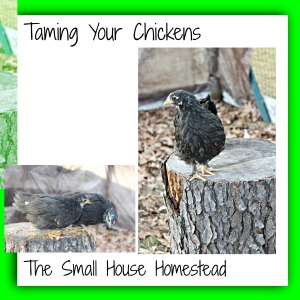 Taming Your Chickens green background jpeg