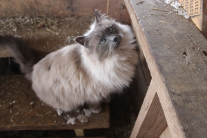 Barn cat USE