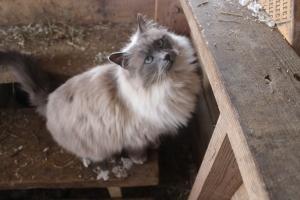 Barn cat USE