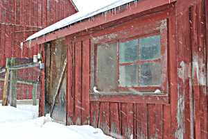 Chicken coop from side  in snow USE jeg
