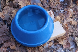 Heated dog bowl