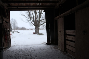 Inside barn looking out