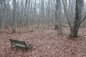 Bench and woods USE first