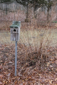 Bluebird house USE