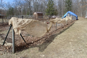 Drying the burlap nthe fence USE