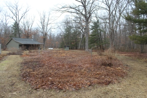 Meadow in March