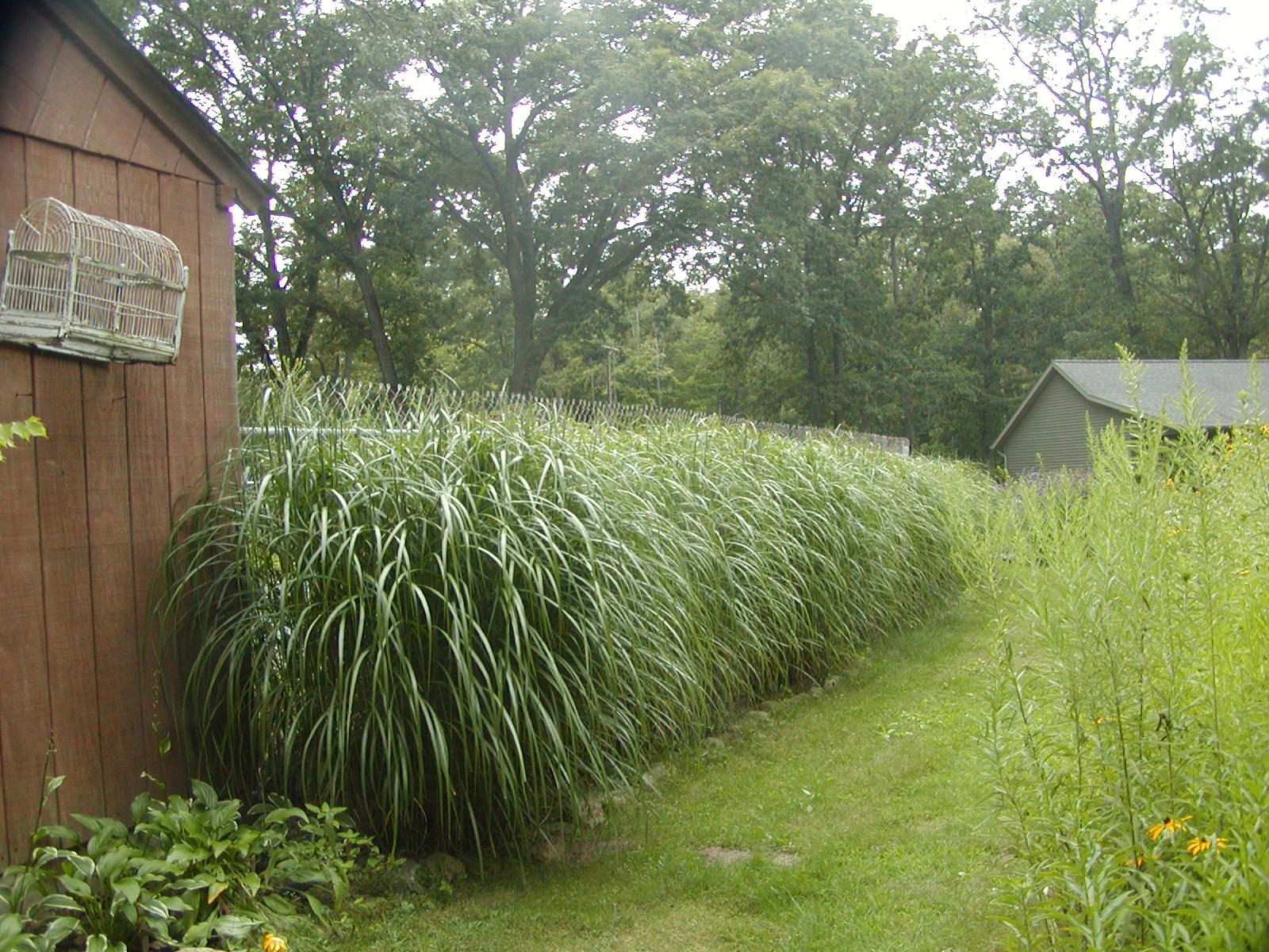 Pool landscaping with ornamental grasses designing with for Ornamental grass edging