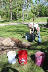 Gene from front tree going in hole