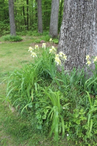 VERT yellow iris forge trees USE