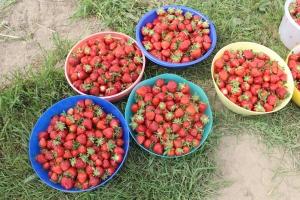 Berries close