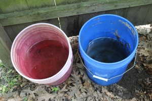Compost tea buckets empty