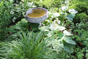 Gretas hostas and bird bath