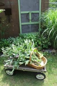 Herbs  in wagon against pool shack USE