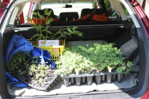 Lupines in Saburu trunk USE