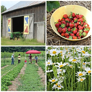 Pleasant Hill Farm Collage 4 jpeg no text