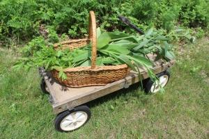 Wooden wagon against meadow bed USE
