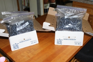 Blueberrie sin bag in boxes USE