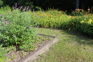 Butterfly bed to left and daylilies to righthand USE