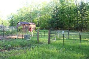 Chicken Fencing Area