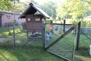 Coop and run gate slightly open