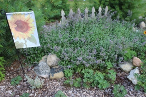 LOVE THIS flag and catmint bed