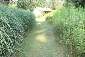 Pathway deep meadow boarder