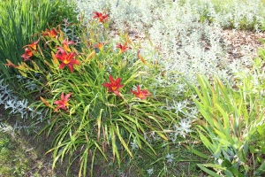 Red daylilies and artesmia USE