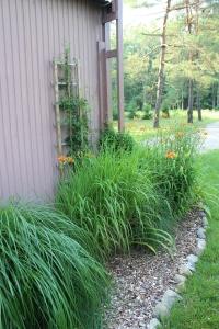 VERT corer of pole barn daylilies