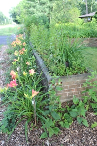 VERT pick daylilies and brick bed interesting view USE