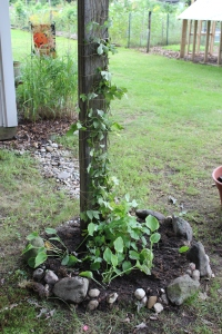 Forge hops planting USE