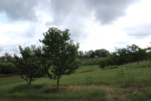 Two trees in the orchard