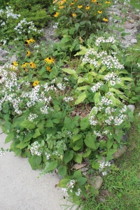 White flowers at coner of porch