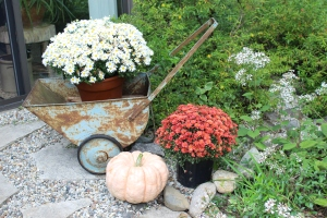 Pumpkins and white aster like USE