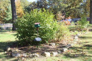 Bird grden shrub and birdfeeder USE