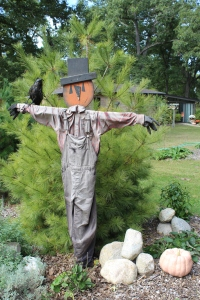 Scarecrow pumpkin stnes maybe