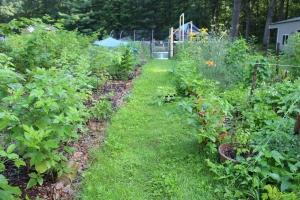 Vegetable Garden July 25.15
