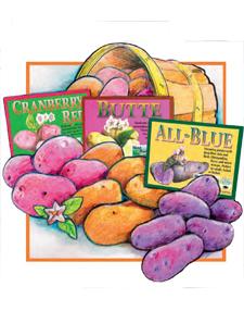 Seed Potato sampler