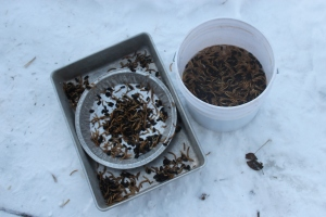 mealworms in tin and bucket in snow USE