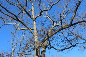 Reaching branches in bue sky