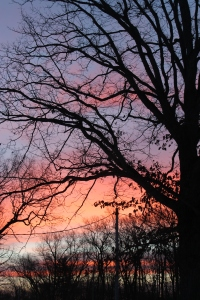 Sunrise tree in half interesting for text