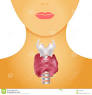 Thyroid in womans neck